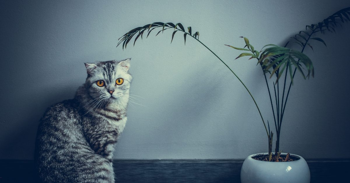 How To Keep Cats Out Of Plants [7 Simple & Effective Ways]