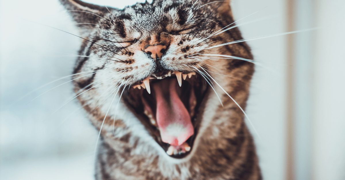 15 Best Cat Food for Older Cats with Bad Teeth