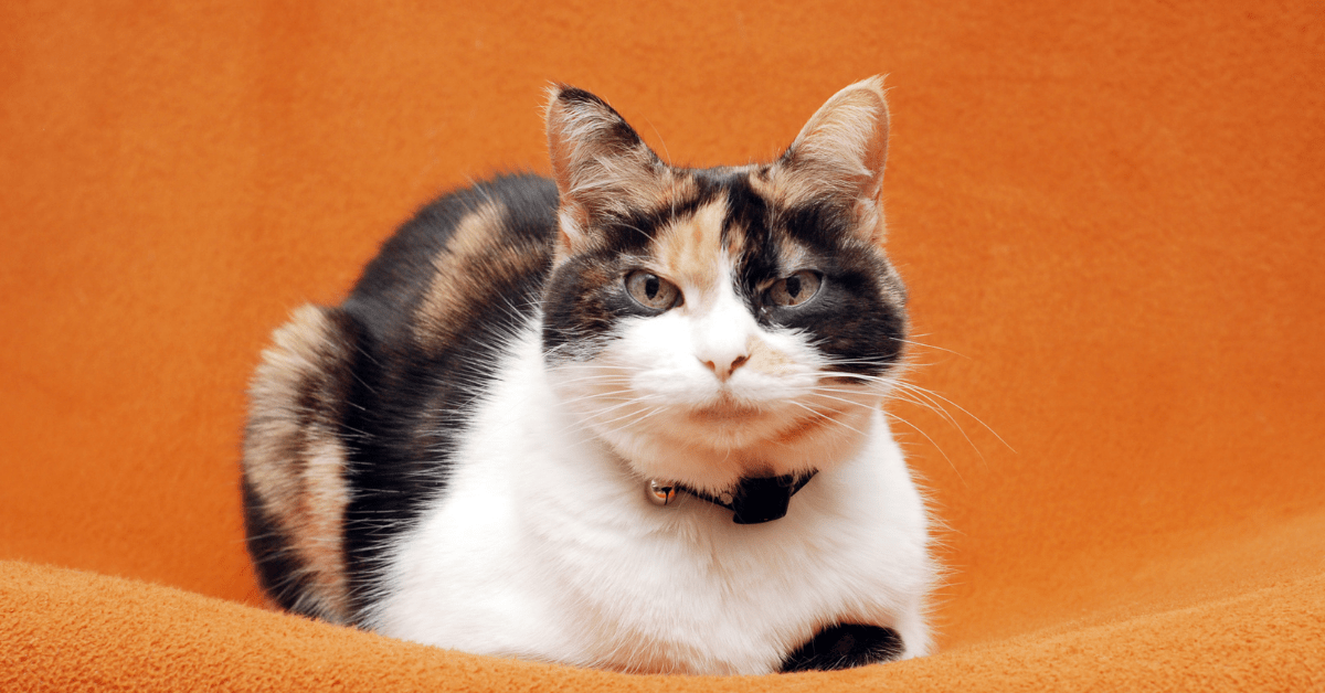 best cat food for older cats that vomit