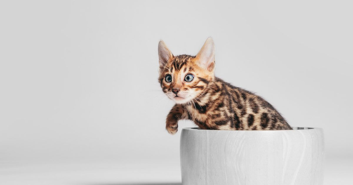 10 Of The Best Cat Water Bowls That Won't Tip Over, 2021