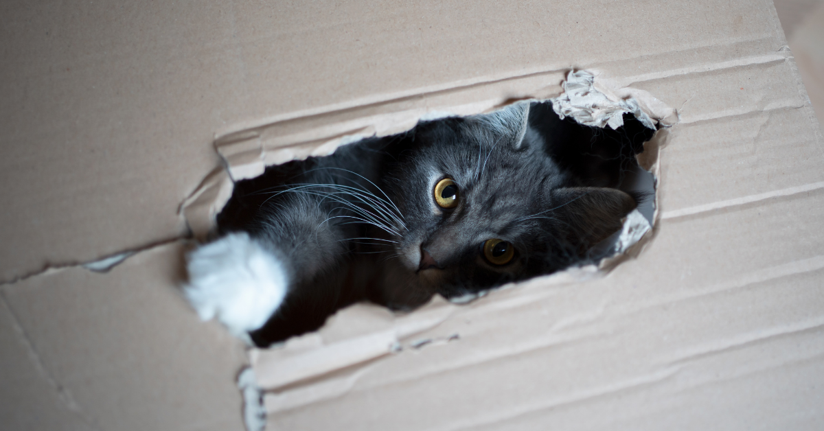 What Is Pica In Cats?