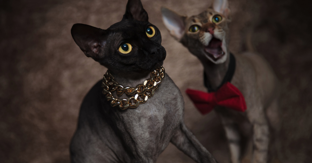 Why Is My Cat Panting? Don't Stress, 5 Intriguing Reasons Why