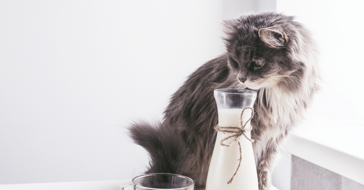 Can Cats Have Almond Milk? Is It A Great Whole Milk ...