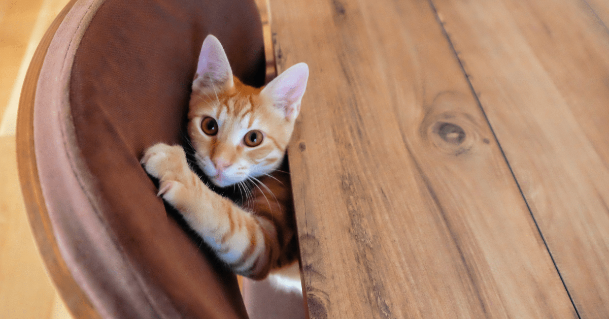 How To Keep Cats From Scratching Furniture? Vinegar! Simple & Easy Methods, 2021
