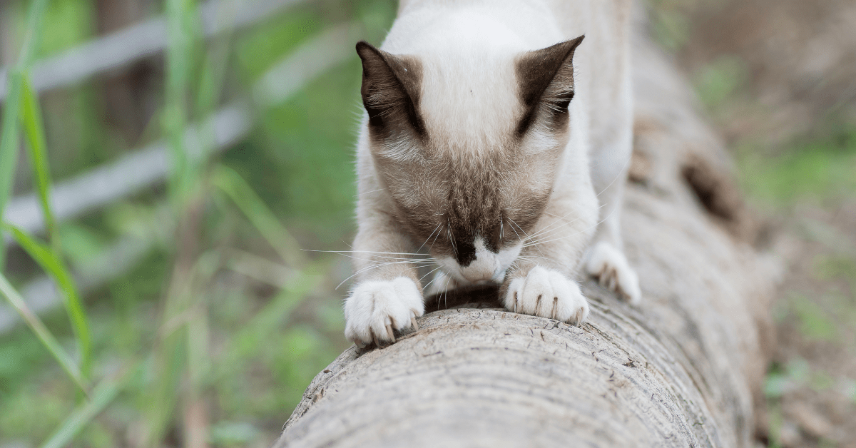 how to keep cats from scratching furniture