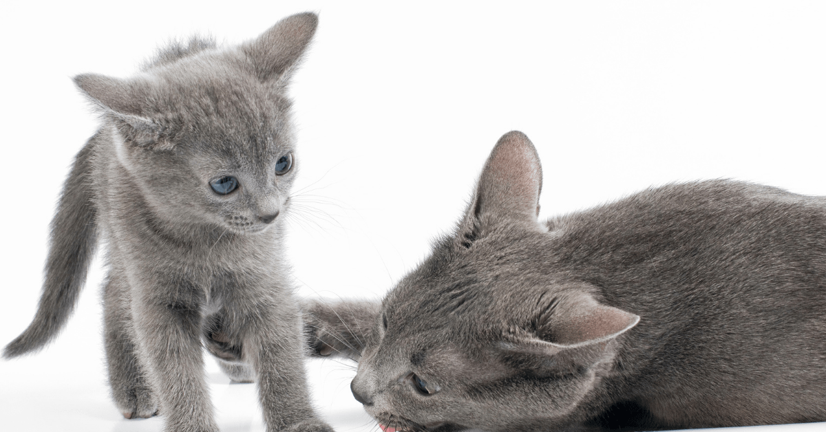 When Can Kittens Leave Their Mom? What's The Ideal Time?