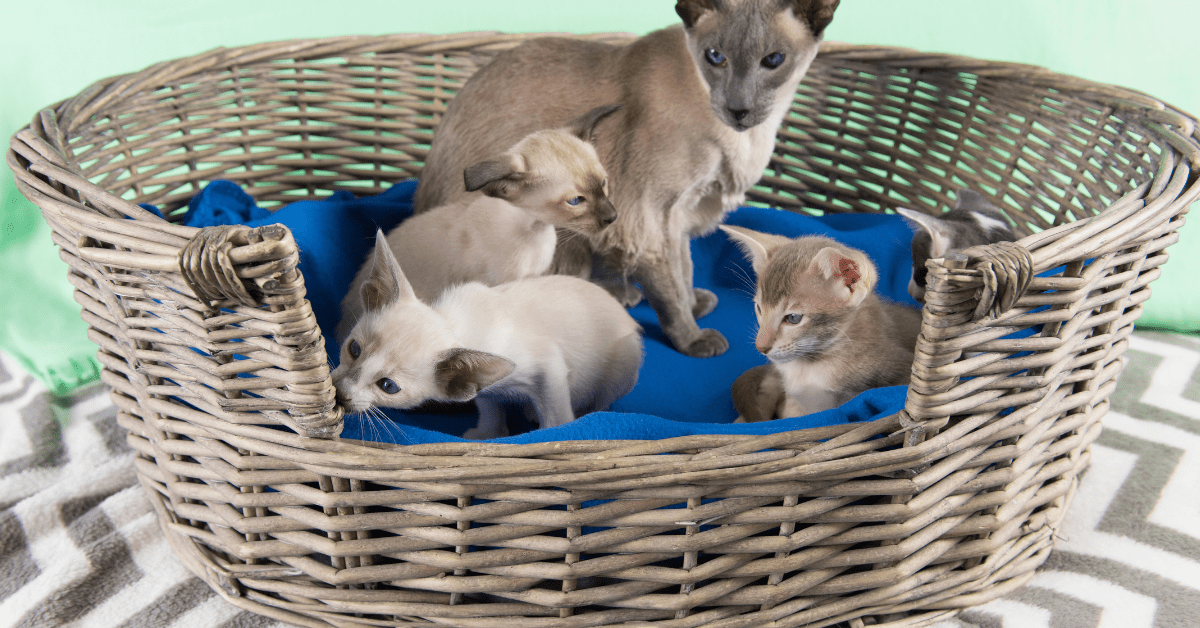 when can kittens leave their mom