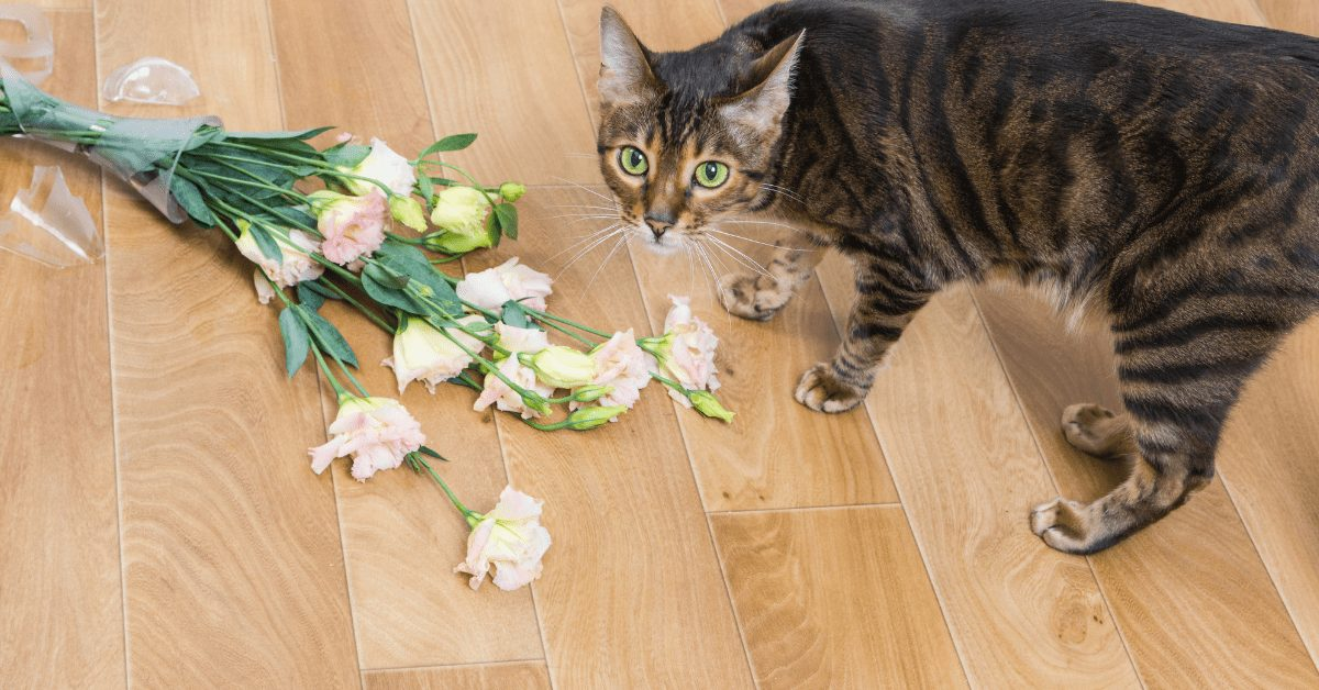 how much does a toyger cost