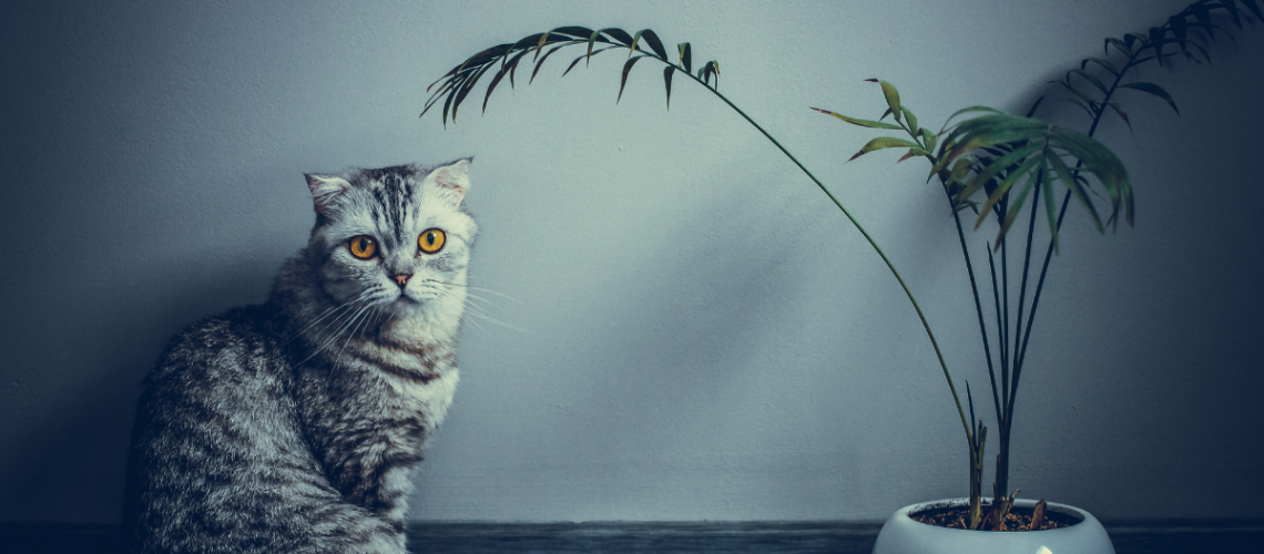 toxic plants for cats